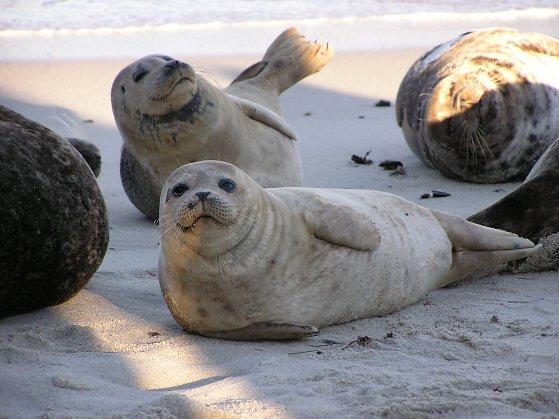 Seals-11.jpg