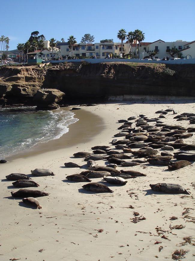 seals-sleeping-childrens-pool-la-jolla.jpg